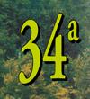 34° sagra dei S'cios